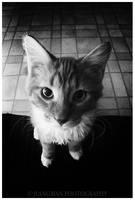 _Mr.Cat by thephotogenesis