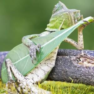 AmericanGecko's Profile Picture