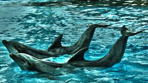 Dolphins posing politely