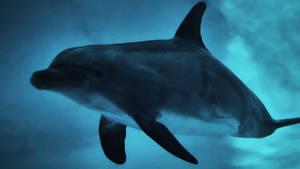 Ecco the dolphin locating his pod