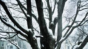 Tree of winter