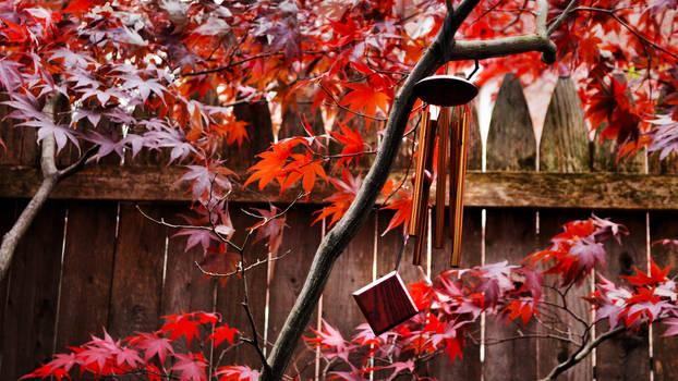 Blustery autumn wind