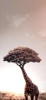 Treerafe