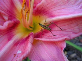 cool flower 2 with grasshopper by frogking