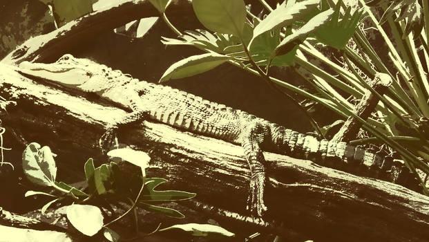 The Brandy Croc