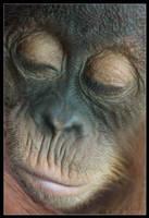 Baby Orangutan by Prince-Photography
