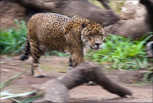 Jaguar 24-118 by lomoboy