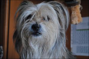 ChaprinTatera's Profile Picture