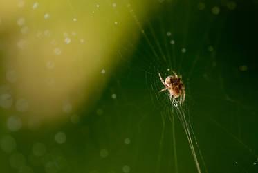 Spider by Yassser84