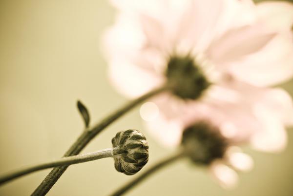 Baby_flower_by_Yassser84.jpg