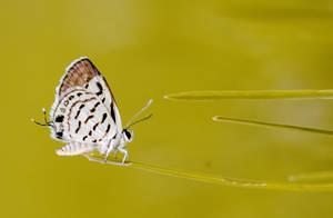 Butterfly by Yassser84
