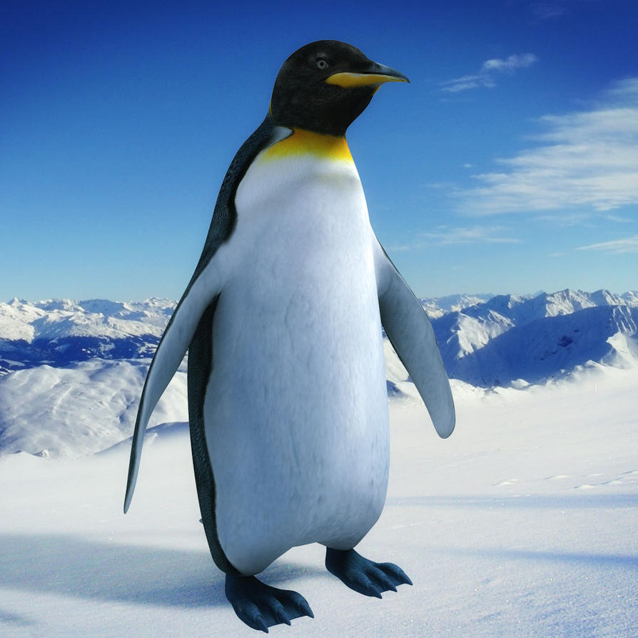 Penguin 3d Model by e-symmetric