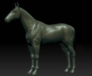 Horse Zbrush W.I.P by ergin3d