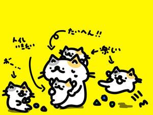 fight!!cat!