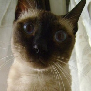 DELOmega's Profile Picture