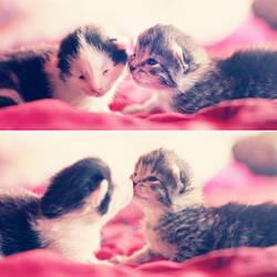 kitten kisses by emeraldiris
