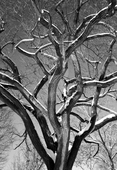 untitled -tree- by driventodesign