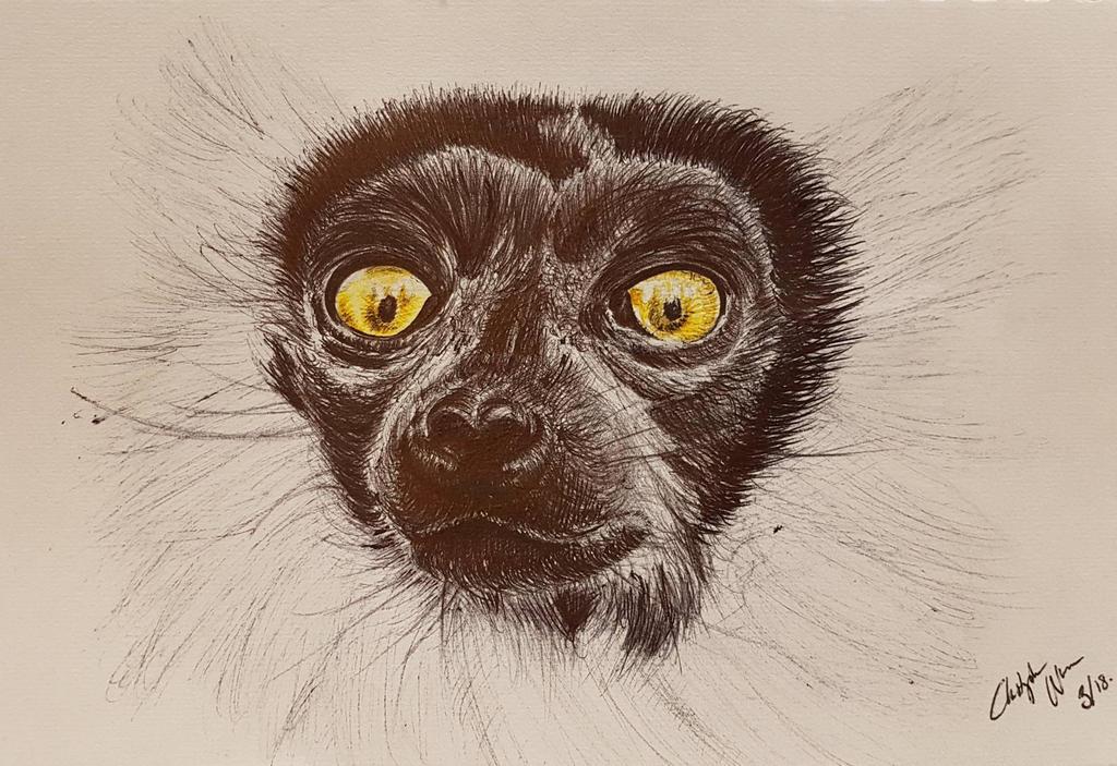 lemur by Chri8