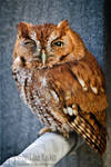 Not A Morning Owl II