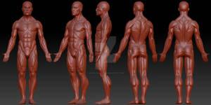 3D Modeling: Male Anatomy
