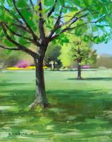 plein air tree by turningshadow