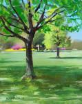 plein air tree