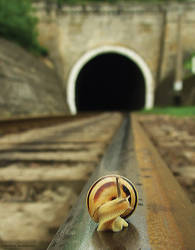 oko, train's komin' by EmilyaManole