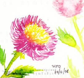 Pink Stinking Passion flower