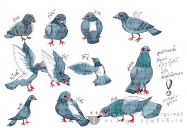 All Gestures Of Thai Gray Fat Pigeon
