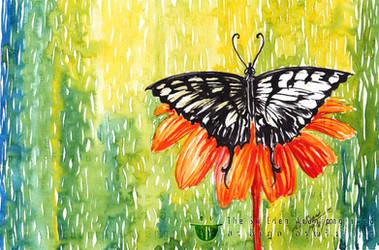 Butterfly Eating Honey On Beautiful Orange Flower