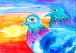 My Two Lovely Kook Kik Pigeons