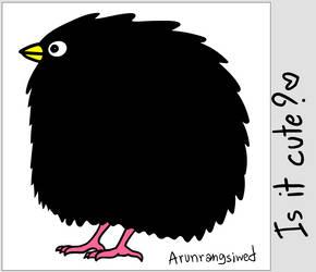 Black Fat Bird