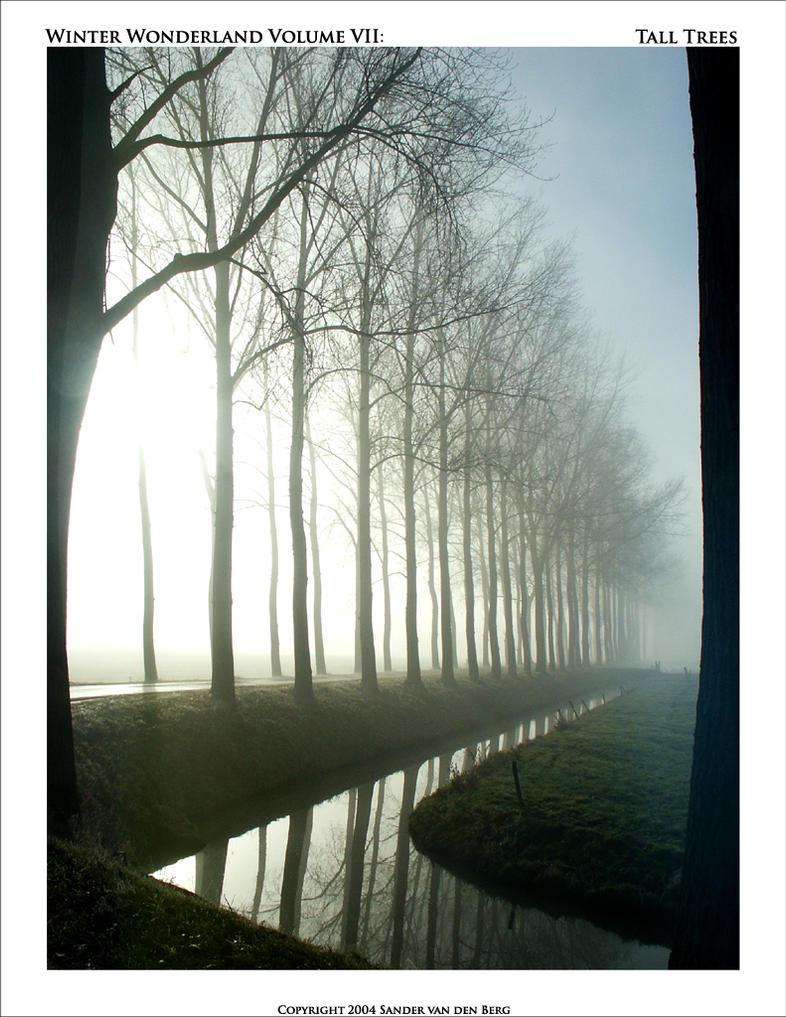 Tall Trees by sandervandenberg