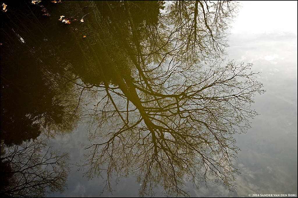 Reflecting Tree by sandervandenberg