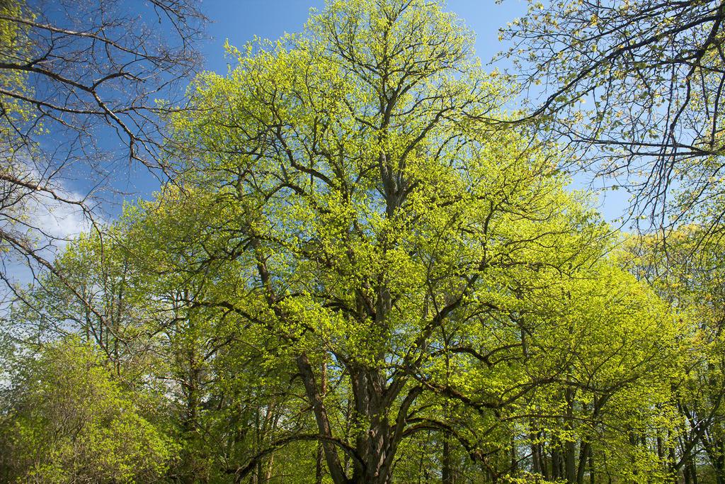 Spring by robee-V