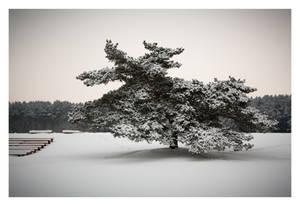Winter by robee-V