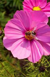 los flores I