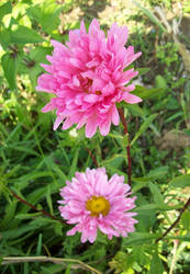 los flores II