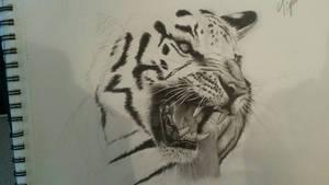 Tiger - WIP