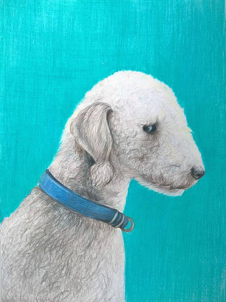 Bedlington Terrier by Sodochka