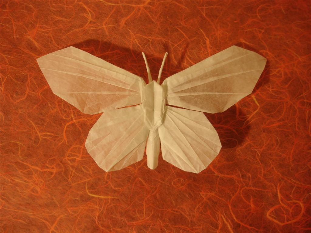 Butterfly Jason Ku By Origami Artist Galen