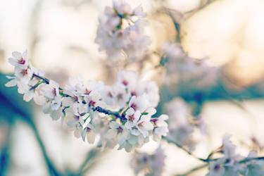 Generic MaFuckin Cherry Blosssoms