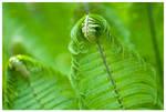 Fronds of fern
