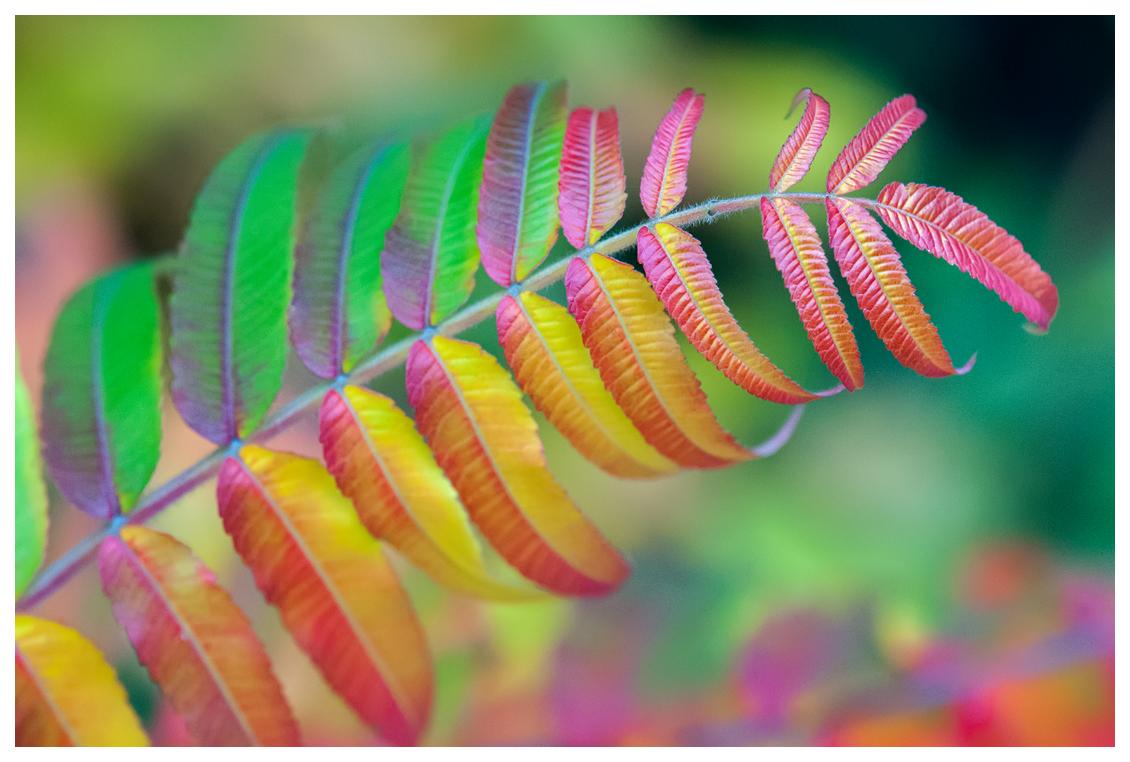 Autumn rainbow by KKokosz