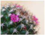 Multiflower
