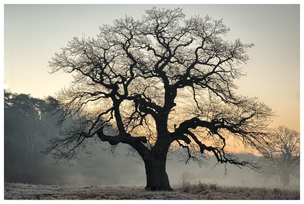 Trees, part 2 by KKokosz