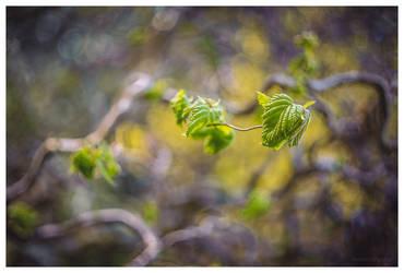 The Leaf by KKokosz