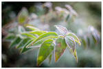 November plants I