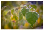 November plants II by KKokosz