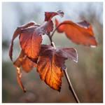 November plants III
